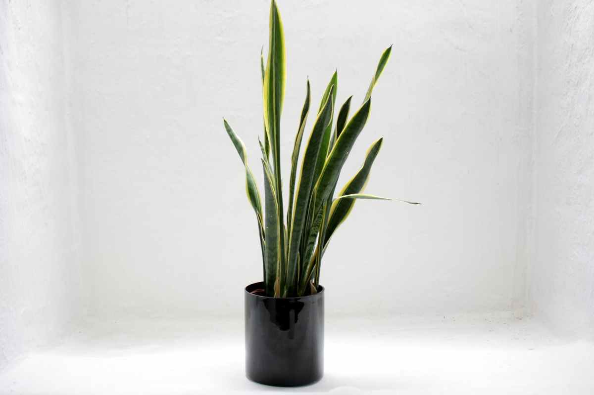 5 Great House Plants ForBeginners